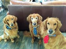Carley, Shilo and Scout Bruno