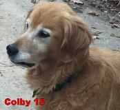 Colby 15