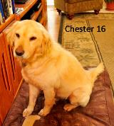 Chester 16