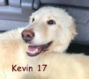 Kevin 17