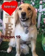 Pippen 19