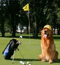 Golden Golf