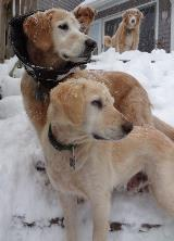 Chester and Friend in Snow 2