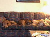 Fannie (middle) and friends share the couch