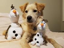 Olaf and friends